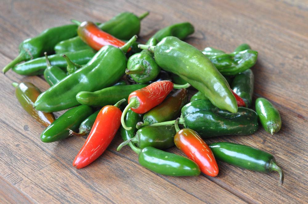 Chilizucht  chilizucht-Chilizucht19-Chilizucht  – Tipps & Tricks zum Chilianbau