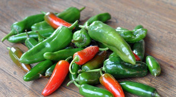 Chilizucht Chilianbau