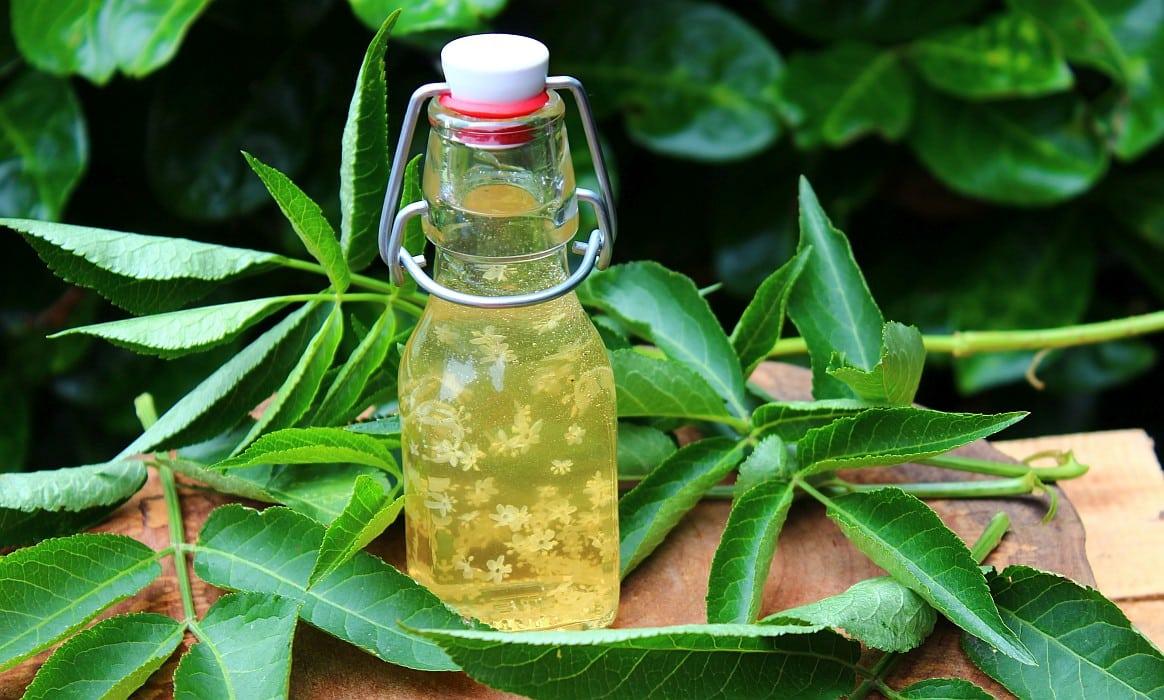Holunderblütenessig Rezept holunderblütenessig-Holunderbluetenessig selber machen-Holunderblütenessig selber machen